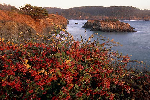 image 6-486-14 California, Mendocino , Mendocino Headlands State Park, Coastal bluffs