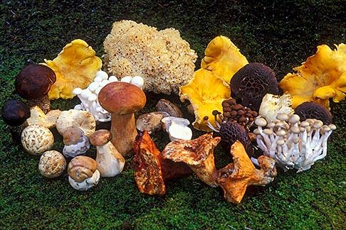 image 6-487-23 California, Mendocino , Assorted wild mushrooms