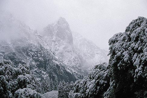 image 7-587-24 California, Yosemite National Park, Trees in snow