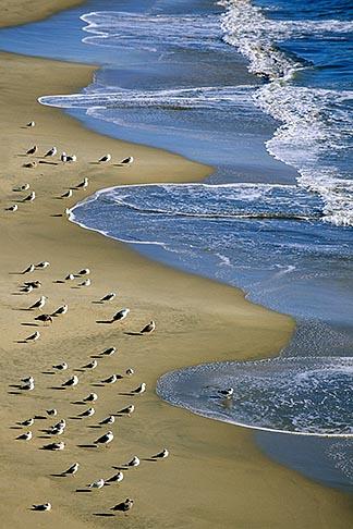 image 7-602-32 California, Santa Cruz, Cowell Beach, Gulls