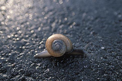 image 9-595-18 Animals, Snail on pavement