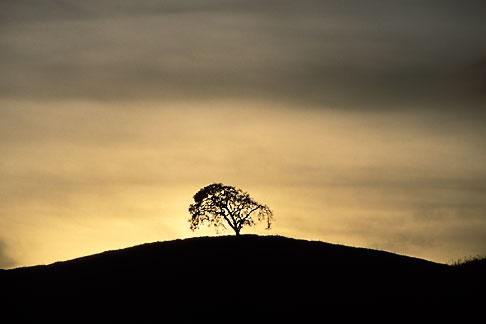 image S2-15-2 California, Contra Costa, Tree on hilltop