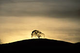curve stock photography | California, Contra Costa, Tree on hilltop, image id S2-15-2