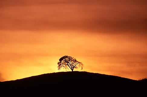image S2-15-20 California, Contra Costa, Tree on hilltop
