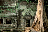 old stock photography | Cambodia, Angkor Wat, Ta Prohm, image id 0-401-25