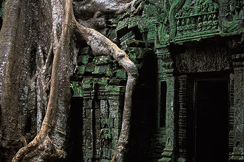 image 0-401-27 Cambodia, Angkor Wat, Ta Prohm, roots and banyan tree