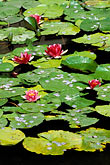tranquil stock photography | China, Beijing, Lily Pond, Imperial Palace, image id 4-354-3
