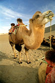 barren stock photography | China, Dunhuang, Camels, Mingsha sand dunes , image id 4-385-24