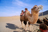 barren stock photography | China, Dunhuang, Camels, Mingsha sand dunes , image id 4-385-92