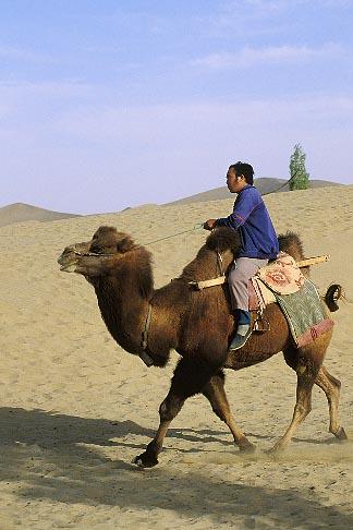 image 4-387-21 China, Dunhuang, Camel rider, Mingsha sand dunes