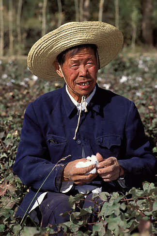 image 4-390-17 China, Dunhuang, Farmer picking cotton in the fields