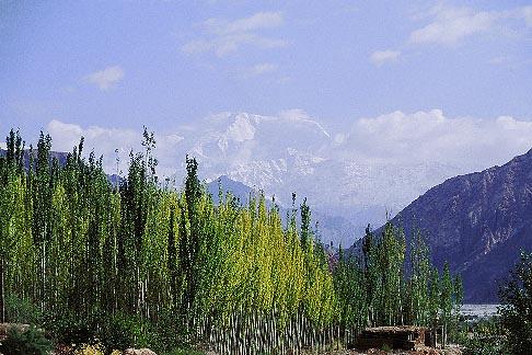 image 4-436-18 China, Pamirs, Birch trees beneath Kongur
