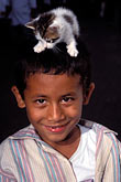 vertical stock photography | Costa Rica, Boy with kitten on his head, image id 8-436-20