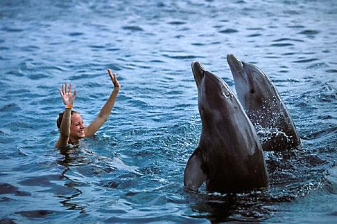 image 3-432-19 Curacao, Willemstad, Dolphin Academy, Curacao Sea Aquarium