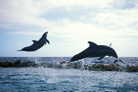 image 3-432-6 Curacao, Willemstad, Dolphin Academy, Curacao Sea Aquarium
