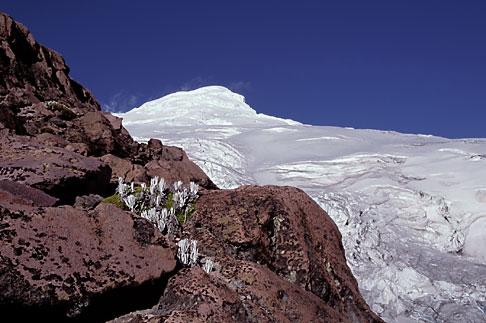 image 2-17-4 Ecuador, Flowers on ridge before Cayambe