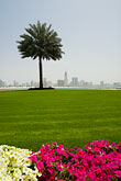 on ones own stock photography | United Arab Emirates, Sharjah, Harbor and City Skyline, palm tree in foreground, image id 8-730-302