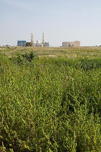 image 8-730-361 United Arab Emirates, Umm al Quwain , Mosque and grassy field