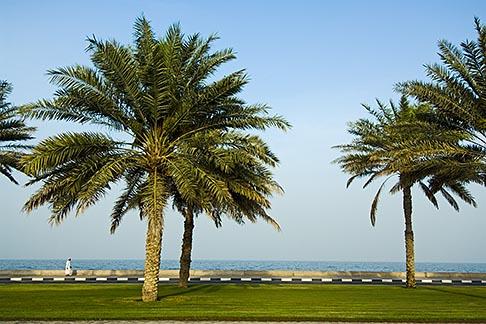 image 8-730-427 United Arab Emirates, Fujairah, Palm trees along waterfront