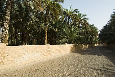 image 8-730-9769 United Arab Emirates, Abu Dhabi, Al Ain, Al Ain, Oasis