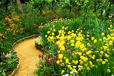 image 3-752-19 England, Chelsea Flower Show, Bonterra Organic Wine Garden, garden path with charlock and red campion