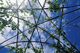 blue sky stock photography | England, Chelsea Flower Show, Bonterra Organic Wine Garden, grape vines, image id 3-752-32