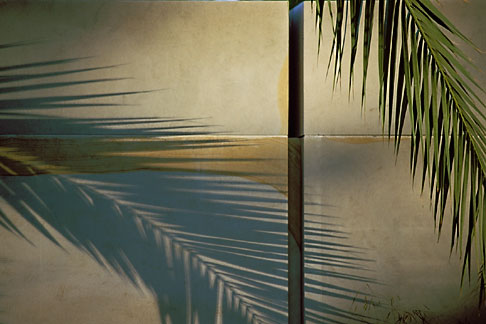 image 3-752-6 England, Chelsea Flower Show, Garden from the Desert, Shadow of date palm