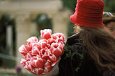 red headdress stock photography | England, Chelsea Flower Show, Anna Greig leaves the show with an armful of tulips, image id 3-757-16