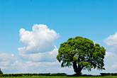 blue sky stock photography | England, Oak tree and clouds, image id 4-900-2176