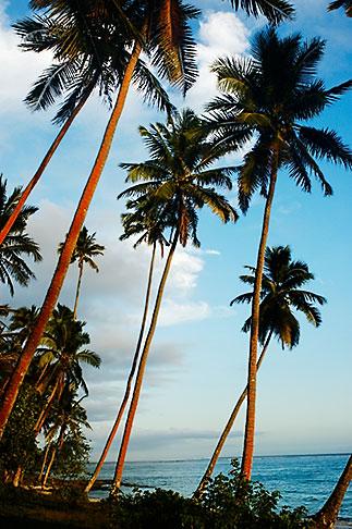image 5-600-2764 Fiji, Beach palms