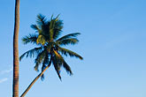 straight line stock photography | Fiji, Viti Levu, Palms, image id 5-610-2771