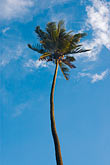 cloudy stock photography | Fiji, Viti Levu, Palm, image id 5-610-2774