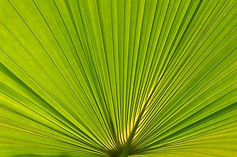 image 5-610-9365 Plants, Palm leaves