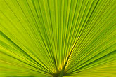 centred stock photography | Plants, Palm leaves, image id 5-610-9365