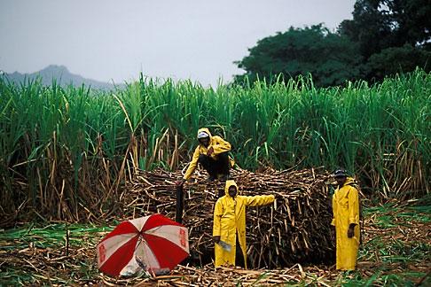 image 9-530-33 Fiji, Sugar cane workers, Viti Levu