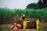 sugar cane field stock photography | Fiji, Sugar cane workers, Viti Levu, image id 9-530-33