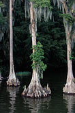 winter stock photography | Florida, Winter Haven, Cypress Gardens, image id 2-481-37