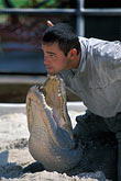 one person stock photography | Florida, Orlando, Gatorland, Alligator wrestling, image id 2-500-54