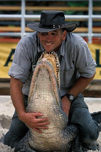 image 2-500-61 Florida, Orlando, Gatorland, Alligator wrestling