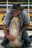 one man only stock photography | Florida, Orlando, Gatorland, Alligator wrestling, image id 2-500-61