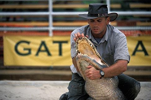 image 2-500-67 Florida, Orlando, Gatorland, Alligator wrestling