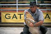 one man only stock photography | Florida, Orlando, Gatorland, Alligator wrestling, image id 2-500-67