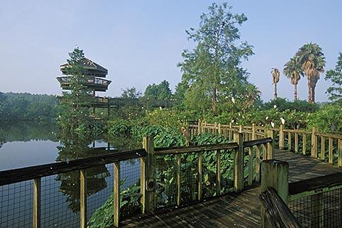 image 2-500-7 Florida, Orlando, Gatorland boardwalk and Bird Preserve