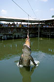 biting stock photography | Florida, Orlando, Gatorland, Jumparoo, image id 2-501-3
