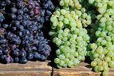 horizontal stock photography | California, Benicia, Grapes, Farmer