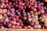 california stock photography | California, Benicia, Grapes, Farmer