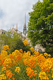 floriculture stock photography | France, Paris, Cath�drale Notre Dame de Paris, image id 6-450-195