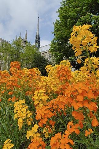 image 6-450-204 France, Paris, Cathedrale Notre Dame de Paris