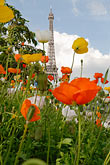 flower stock photography | France, Paris, Eiffel Tower and garden, image id 6-450-256