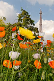 flower stock photography | France, Paris, Eiffel Tower and garden, image id 6-450-264
